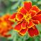 庭の花35