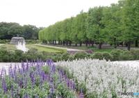 新緑のカナールと花壇