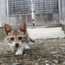 神社で出会ったネコさん(2)