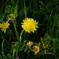 草むらの花