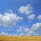 収穫を喜ぶ空