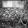 「Halfでいこう: Bicycle Scene」 (film)