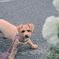 my pretty dog Ⅱ # 334