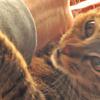 うち猫のギャラリー2