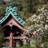 光則寺の梅