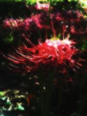 彼の岸の花