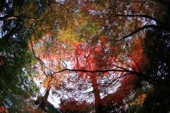 視界は全て紅葉なり