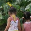 向日葵の迷宮