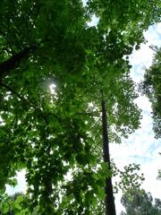 緑と木漏れ日と青空と白い雲