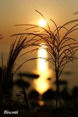 夕日に輝く