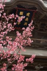 早春の建長寺
