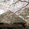 古民家と山桜