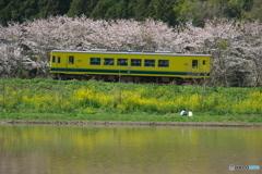 いすみの春04