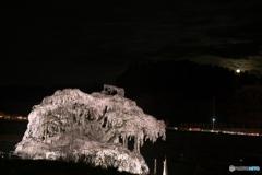 闇夜に浮かぶ滝桜03