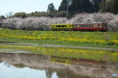 いすみの春03