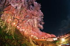 春爛漫02