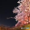 春爛漫01