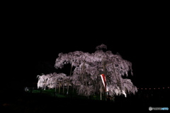 闇夜に浮かぶ滝桜01