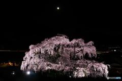 闇夜に浮かぶ滝桜04