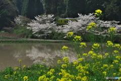 いすみの春02