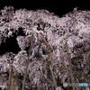 闇夜に浮かぶ滝桜02