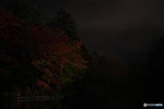 漆黒の闇の中で(雲場池バージョン)