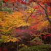 高槻、秋の外山