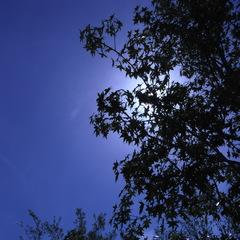 今日の青空1