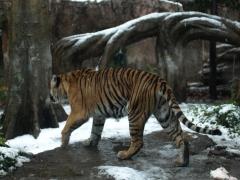 2008年━雪の動物園