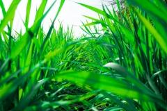 草とじゃれる