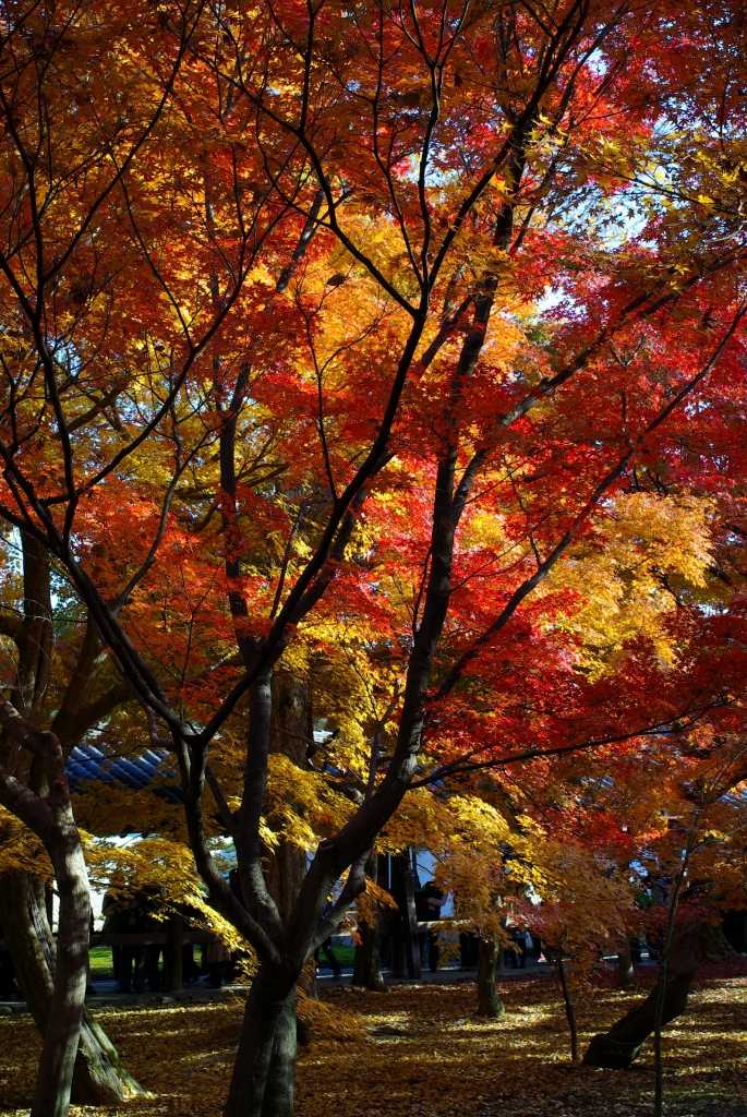 東福寺境内