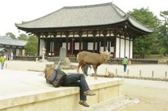 興福寺と鹿