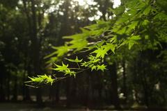 糺の森にて