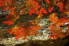 女人高野の紅葉