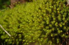 緑の小宇宙