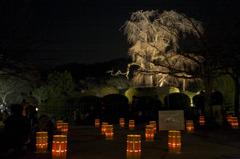京都東山花灯路 2010