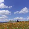 花の丘の春