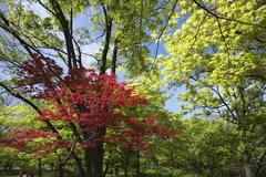 長居植物園 新緑
