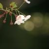'06 桜