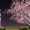 東京スカイツリー桜特別ライティング「舞」と大寒桜