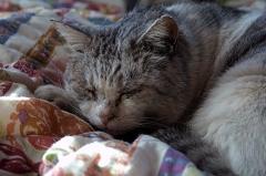 実家の猫 1