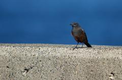 海辺の青い鳥