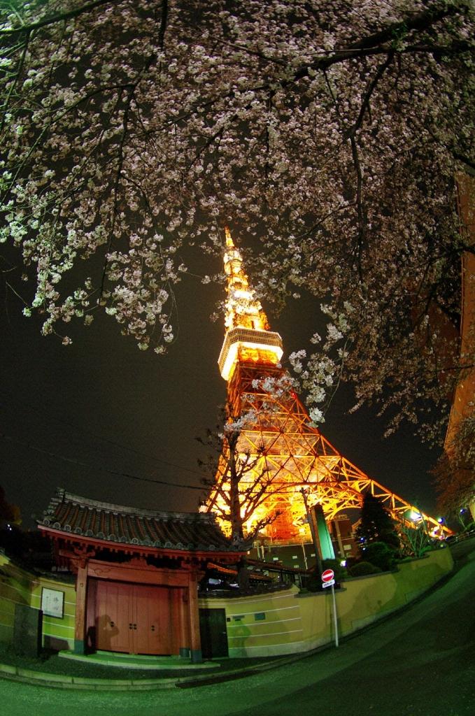 TOKYO・桜