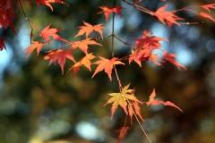 高尾山ふもとの紅葉-2007年12月02日-