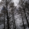 木々-2008年01月24日-