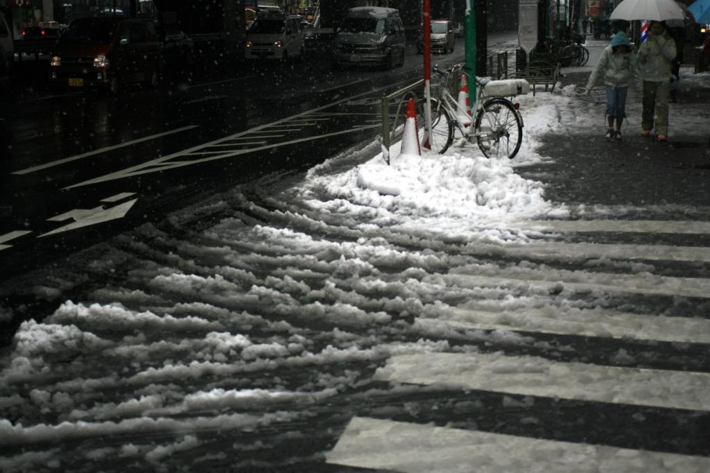 東京に雪が降る-2008月02月03日-