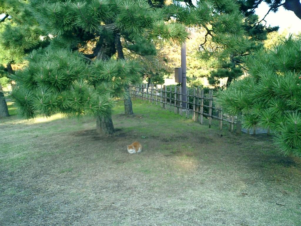 木下 猫太郎