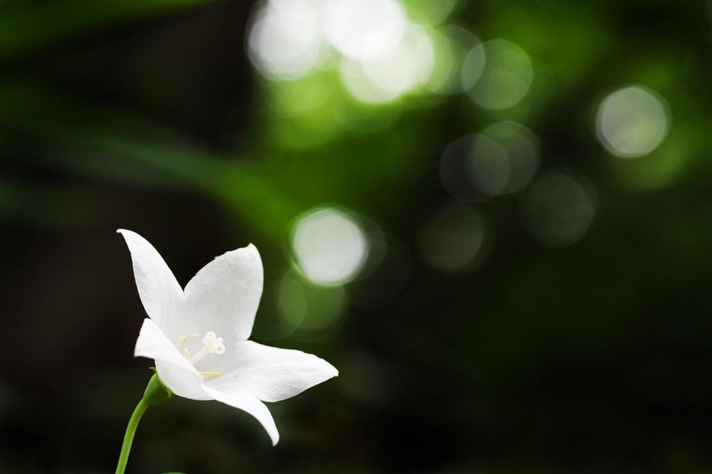 232一輪の花