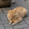 オシンコシンの猫