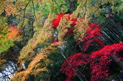 京都 泉涌寺2